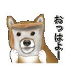 柴っちⅡ(個別スタンプ:1)