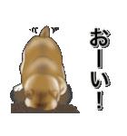 柴っちⅡ(個別スタンプ:3)