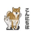 柴っちⅡ(個別スタンプ:5)