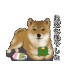 柴っちⅡ(個別スタンプ:7)