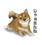 柴っちⅡ(個別スタンプ:12)