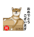 柴っちⅡ(個別スタンプ:25)