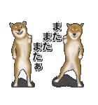 柴っちⅡ(個別スタンプ:29)