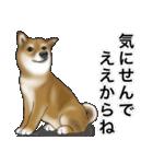 柴っちⅡ(個別スタンプ:31)