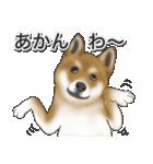 柴っちⅡ(個別スタンプ:33)