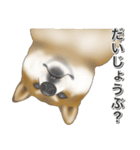 柴っちⅡ(個別スタンプ:35)
