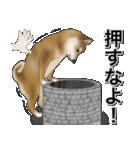 柴っちⅡ(個別スタンプ:38)