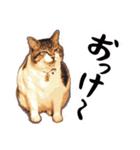 ストーブねこ「ぶさお」のスタンプ!(個別スタンプ:01)