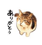 ストーブねこ「ぶさお」のスタンプ!(個別スタンプ:02)