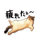 ストーブねこ「ぶさお」のスタンプ!(個別スタンプ:04)