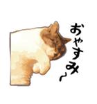 ストーブねこ「ぶさお」のスタンプ!(個別スタンプ:05)