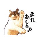 ストーブねこ「ぶさお」のスタンプ!(個別スタンプ:06)