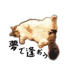ストーブねこ「ぶさお」のスタンプ!(個別スタンプ:07)