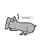 灰色猫さん(個別スタンプ:20)