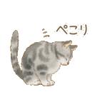 使いやすい☆猫たちのスタンプ(個別スタンプ:29)