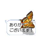 スマホの上の虹色蝶《Movie 04》(個別スタンプ:22)
