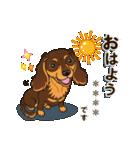 気軽にダックス(チョコタン)【カスタム】(個別スタンプ:01)