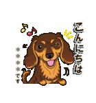 気軽にダックス(チョコタン)【カスタム】(個別スタンプ:03)