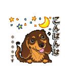 気軽にダックス(チョコタン)【カスタム】(個別スタンプ:04)