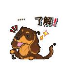 気軽にダックス(チョコタン)【カスタム】(個別スタンプ:05)