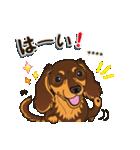 気軽にダックス(チョコタン)【カスタム】(個別スタンプ:07)