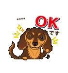 気軽にダックス(チョコタン)【カスタム】(個別スタンプ:08)