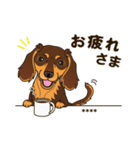 気軽にダックス(チョコタン)【カスタム】(個別スタンプ:10)