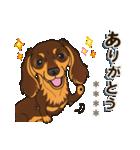 気軽にダックス(チョコタン)【カスタム】(個別スタンプ:13)
