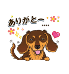 気軽にダックス(チョコタン)【カスタム】(個別スタンプ:14)