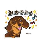気軽にダックス(チョコタン)【カスタム】(個別スタンプ:15)