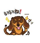 気軽にダックス(チョコタン)【カスタム】(個別スタンプ:17)