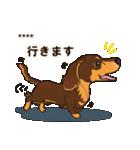 気軽にダックス(チョコタン)【カスタム】(個別スタンプ:19)