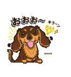 気軽にダックス(チョコタン)【カスタム】(個別スタンプ:22)