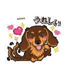 気軽にダックス(チョコタン)【カスタム】(個別スタンプ:23)