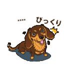 気軽にダックス(チョコタン)【カスタム】(個別スタンプ:27)