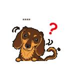 気軽にダックス(チョコタン)【カスタム】(個別スタンプ:28)