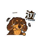 気軽にダックス(チョコタン)【カスタム】(個別スタンプ:30)