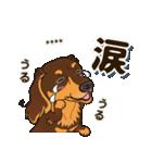 気軽にダックス(チョコタン)【カスタム】(個別スタンプ:35)