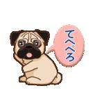 Pug パグ 普段使い(REMAKE)(個別スタンプ:12)