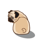 Pug パグ 普段使い(REMAKE)(個別スタンプ:16)
