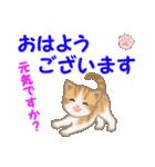 ちび猫5 毎日優しいスタンプ(個別スタンプ:1)