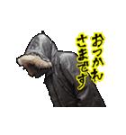 フライトジャケットーズ 2(個別スタンプ:10)