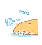 むっちりポメラニアン☆オレンジ☆カスタム(個別スタンプ:17)