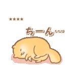 むっちりポメラニアン☆オレンジ☆カスタム(個別スタンプ:18)