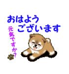よちよち秋田犬 毎日優しいスタンプ(個別スタンプ:1)