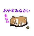 よちよち秋田犬 毎日優しいスタンプ(個別スタンプ:4)