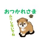 よちよち秋田犬 毎日優しいスタンプ(個別スタンプ:7)
