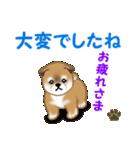 よちよち秋田犬 毎日優しいスタンプ(個別スタンプ:8)