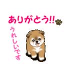 よちよち秋田犬 毎日優しいスタンプ(個別スタンプ:16)