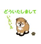 よちよち秋田犬 毎日優しいスタンプ(個別スタンプ:19)